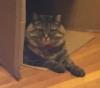 eustaciavye77: (CAT)