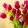zimena: (Nature - Tulips)
