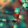 lunadelcorvo: (Floral Blue)
