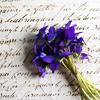 lunadelcorvo: (Violets & Letters)