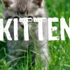 "runpunkrun: grey kitten in a green field, with huge text ""KITTEN"" stamped over it (kitten)"