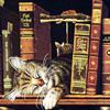 elasait: (Wysocki cat and books)