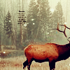 evergreenelk: (elk)