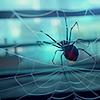 araignee_du_soir: by thebutt (spider)