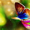 smileawhile: (butterfly)