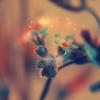 gwy: (Flowermagic)