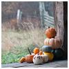 silhouettes: pumpkins on a porch (a book)