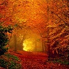 dorchadas: (Autumn Leaves Tunnel)