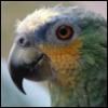 jreynolds197: A dinosaur. (A Bird) (Default)