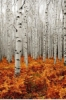 hazelnutdarling: (birch)