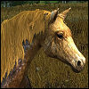 crown_of_antlers: Glorawenn's horse (Gold Steed)