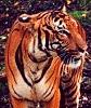 gingicat: (anger/protectiveness - tigerbright)