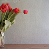 misslucyjane: red tulips in a vase (tulips)
