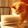littlecatk: a orange cat looking at a book (book)