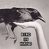 "darchildre: a crow being held in one hand.  text:  ""bird in hand"" (bird in the hand)"