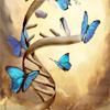 arrin: (Butterflies)