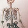 kinoface: (! el señor esqueleto)