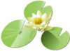 flora: Picture of several lily pads - a lotus blossom surrounded by three green leaves. (lily pad)