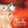 dragonydreams: (Holidays: Kitty Tis the Season)
