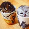 herophelia: (kitties in cups)