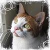 coastal_spirit: (cats Kenshin)