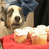 kyosuke: (Nuuuuu the cupcakes...)
