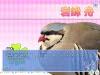 some_creepy_guy: creepy pidgeon (pic#1193988)