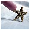 silailo: (starfish)
