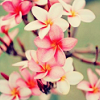 mandolin: (pink flowers)