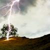tropicmods: (lightning tree)