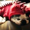 lilian_fang: ([stock] lazy days)