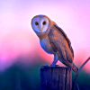 beccadg: (Barn Owl from leesa_perrie)