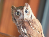 disgruntled_owl: (did i stutter)