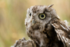 disgruntled_owl: (what)