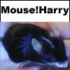 shadowess: (mouse!harry)