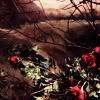 lrdrandallslady: (Roses)