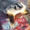 adspexi: (badger, pizza)