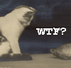 elbales: (WTF cat and tortoise)