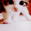 thefrozenheart: little cute cat (stock -> cute cat)
