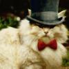 dodificus: (Magical Cat)