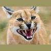 kayshapero: Scared cat (scared)