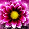 momsdayexchange: (flower)