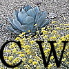 cactuswatcher: From the front (Agave)