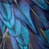 izayoi_no_mikoto: (feather)