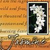 kshandra: Composite image of a sprig of white jasmine and the word Jasmine on a golden background (Jasmine House)