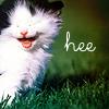 windsilk: (kitty hee~)