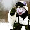 sparkle: (commander cat)