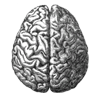 quil: Grayscale diagram of a human brain, viewed from the top. (brain)