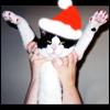 fairestcat: (Dreadful Santa)