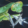 cassyblue: preying mantis catching a space ship (mantis, science fiction)